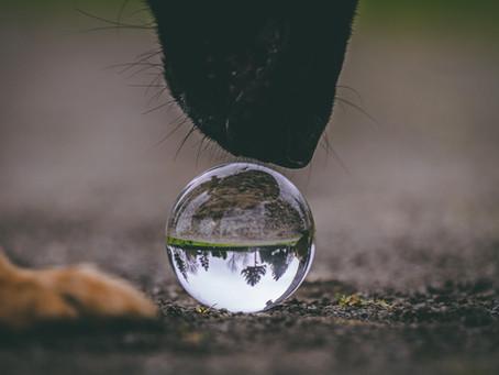 "The ""Major"" problem with dog behavior"