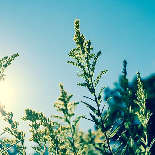 WEERBERICHT: Maak je klaar voor een paar zomerse dagen