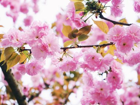 Jarní květena volá