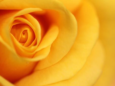 Bloomen Lovely