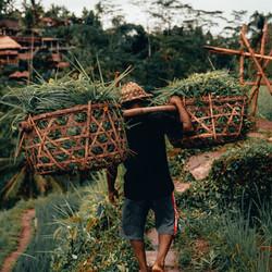 Image by Radoslav Bali