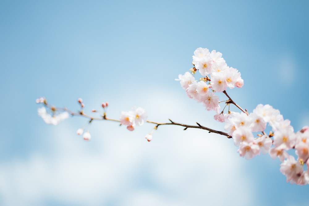 New energy. The spring Blossom and rebirth