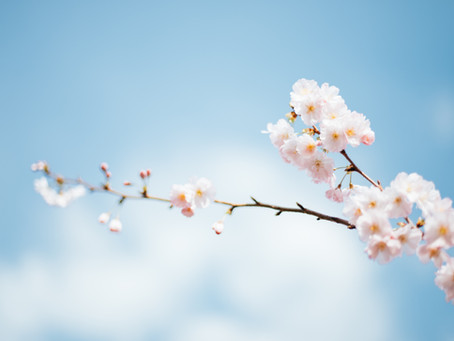 Fit in den Frühling mit Ayurveda