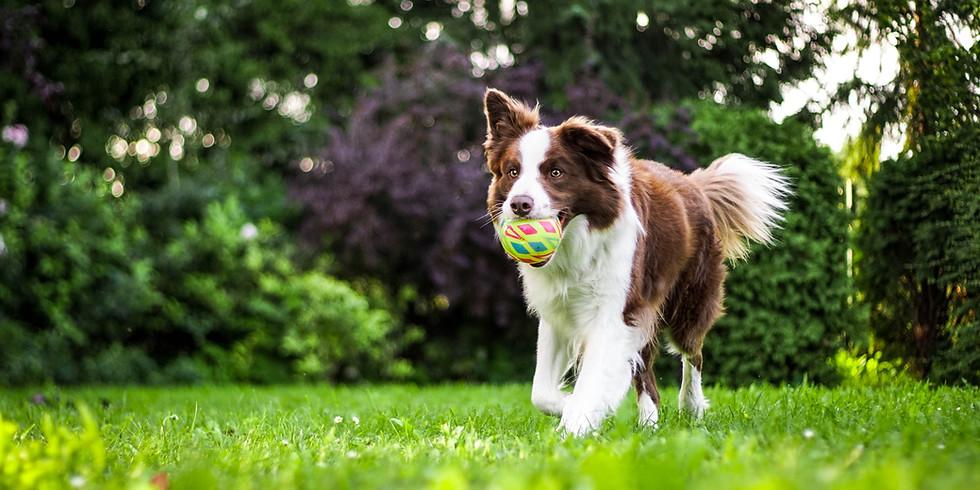 Canine Life Skills Class (8-week/Virtual) -Fridays, at 6:00pm EST