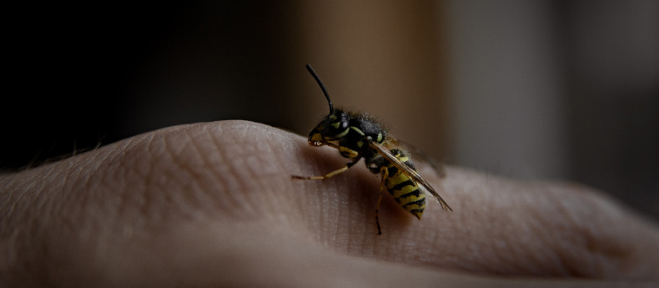 """WASPS - Do we misunderstand """"other systems"""""""