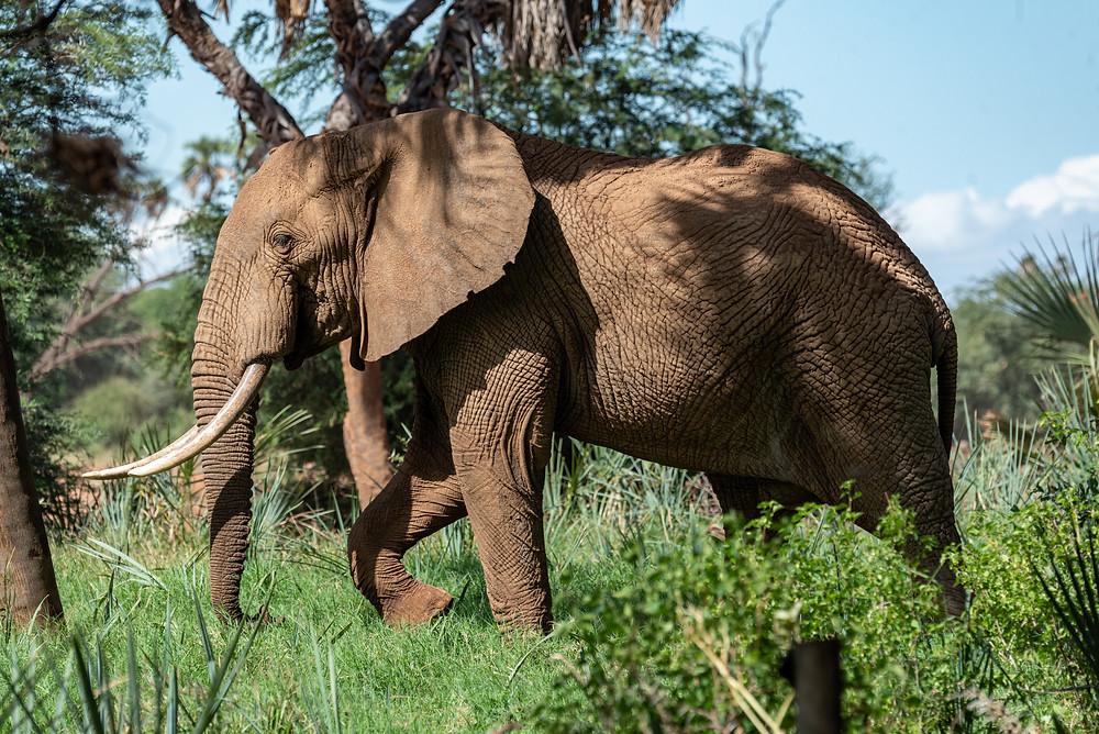 פיל בשמורת פרייאר במדינת קרלה בהודו