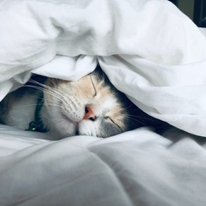 Off to Slumberland: Ways to Achieve Quality Sleep