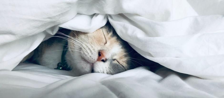 Therapiedecken - helfen sie wirklich bei Schlafproblemen, Angst und Depressionen?