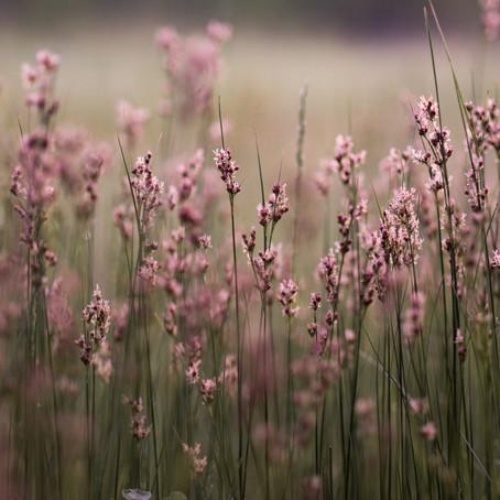 7 Ways to Kill Yard Weeds, Naturally