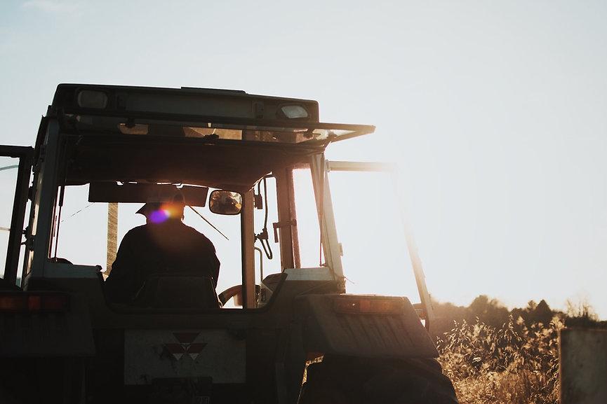 Tracteur, Massey Ferguson, sunset, farmer