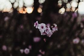 Image by bryn beatson