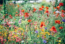 Image de Nature Uninterrupted Photograph
