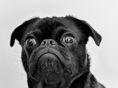 Grumpy Dogs & Grumpy Dog Classes