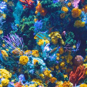 Reef Bleaching