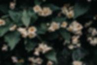 Zero Waste Candle Scnt- Jasmine
