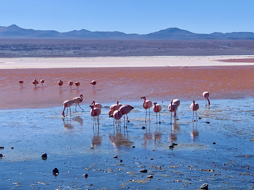 Salar d'Uyuni San Pedro d'Atacama en boucle