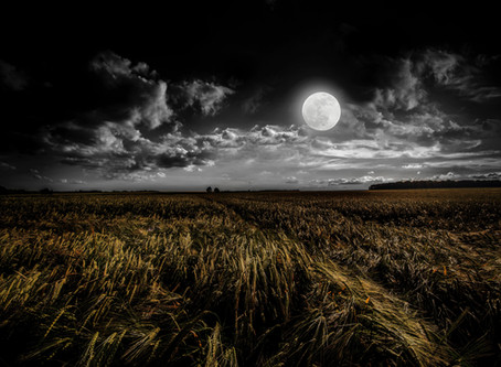 月見に一杯  for harvest moon