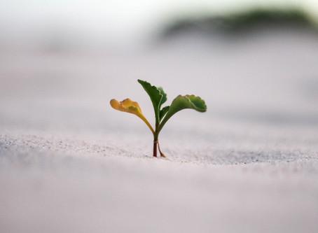 La semilla de Adomini