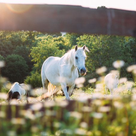 Pasture Board: Easy on the Wallet, but the Luxury Option for Horses