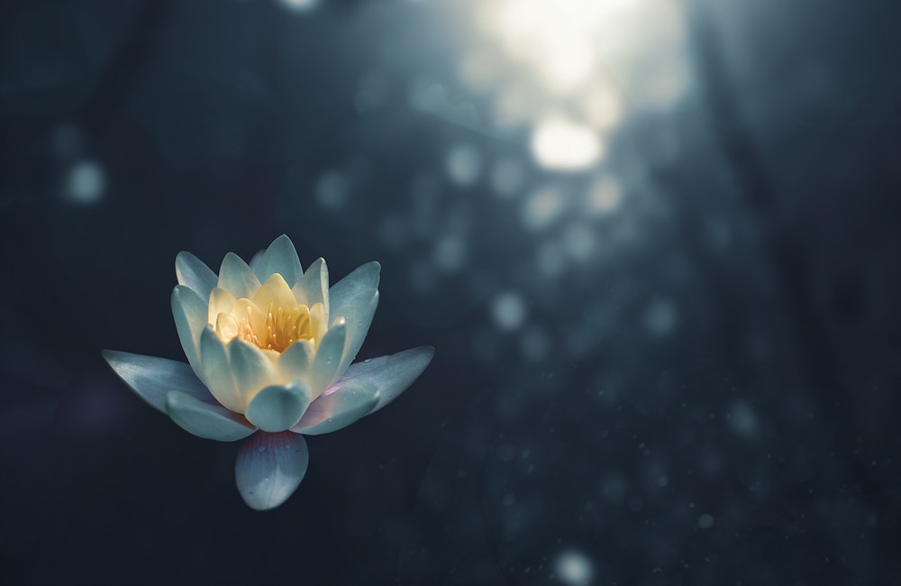 Lotus meditation flower