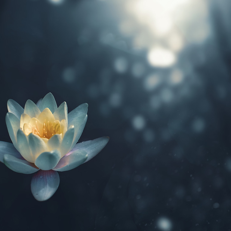 Free 5-day Guided Meditation Journey