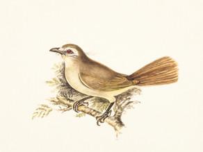 Cordados: Aves