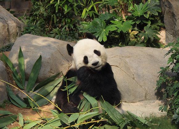 Bamboe - kruiden - 75 gram
