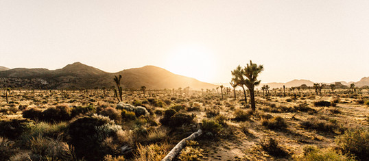 Los Angeles: Road Trips Are Good For The Mind
