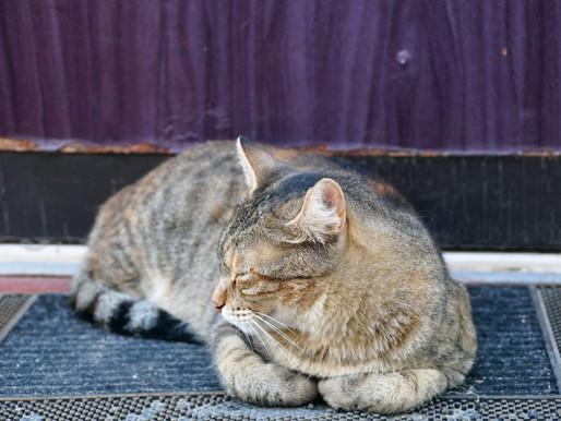Deux chats tirés à bout portant à Granby