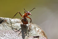 ant control South Jersey