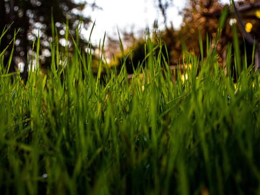 Choosing the Best Fertilizer for Your Lawn