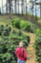 Fazenda Cafés Especiais