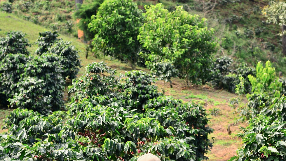 Peru Coffee Farm