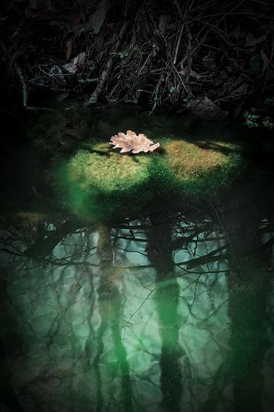 Image by Valentin Salja