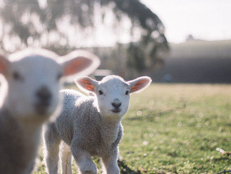 Worthy is the Lamb!