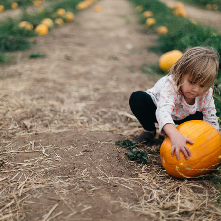 Top Places to go Pumpkin Picking around Boston 2020