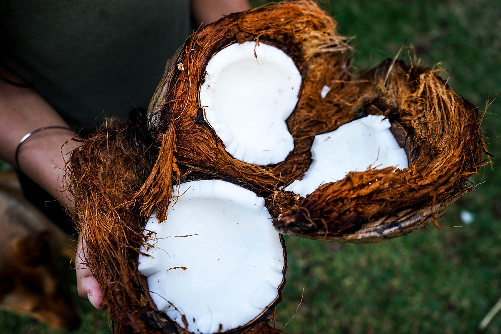 Coconuts in Kenya