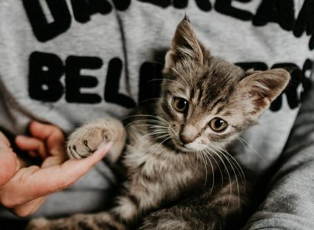 Wie du deiner Katze zeigen kannst, dass du sie liebst