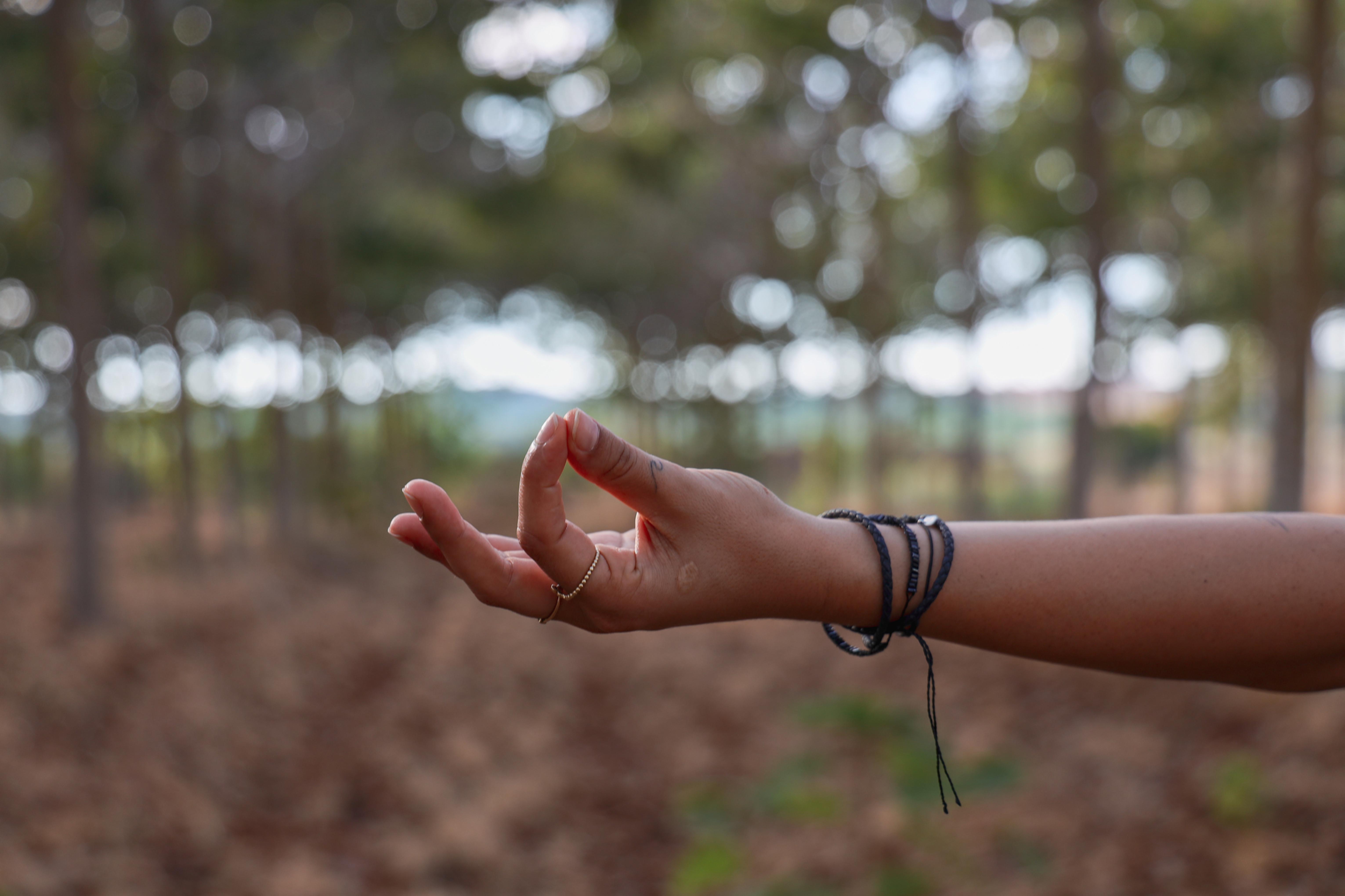 Monthly EcoSangha Meditation