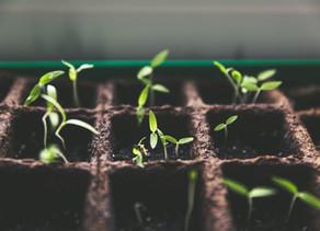 Veggie Farm April 2020 Harvest