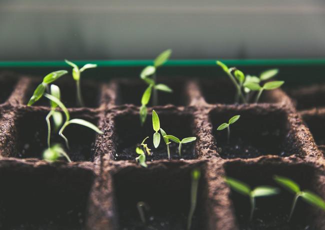 Seeds of Light