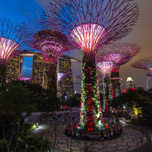 Gardens by the Bay Night Tour