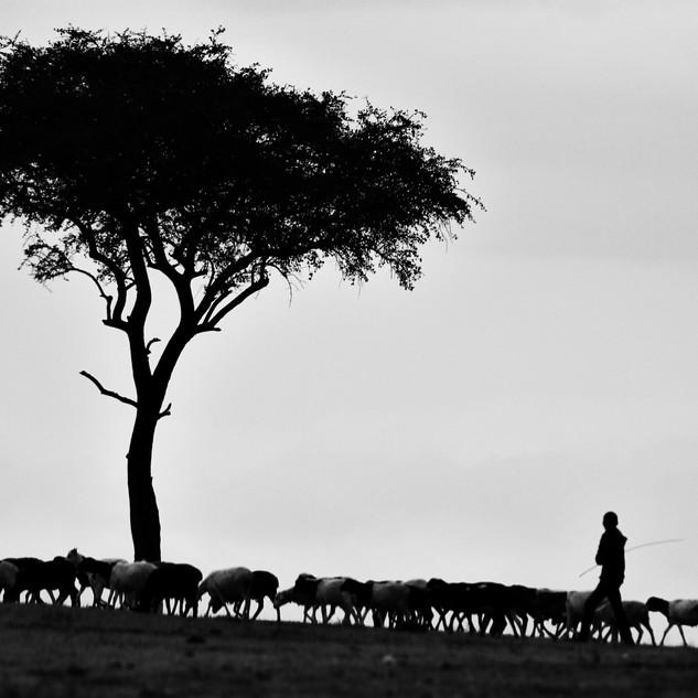 Image by Pawan Sharma