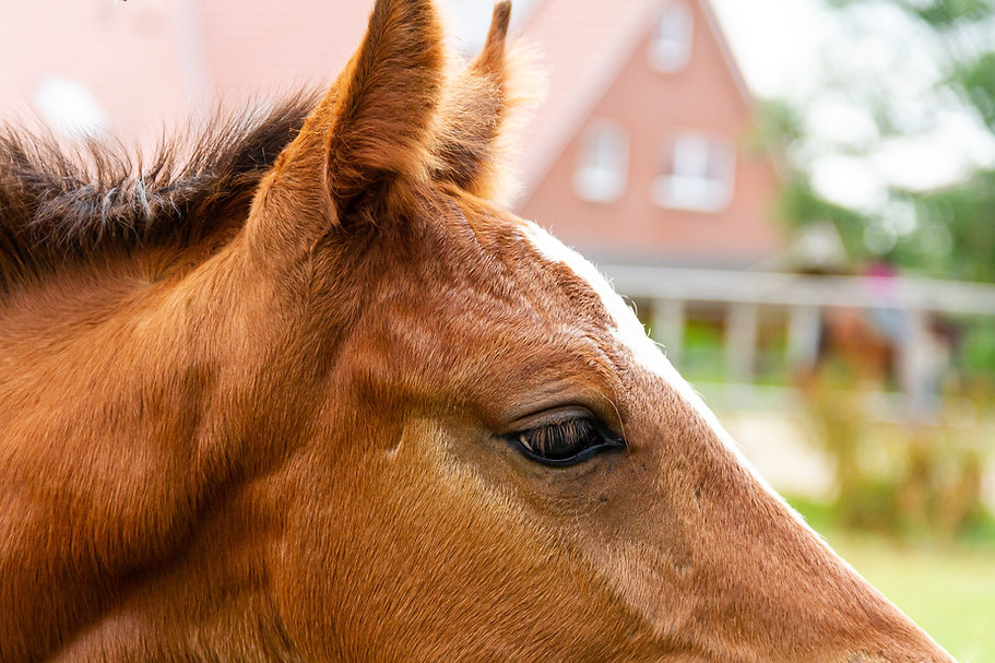 Virginia Horse Industry Board