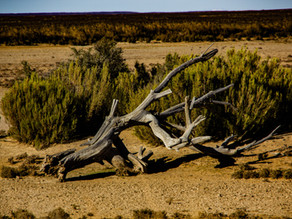 Animals Can Stop Desertification. Really?