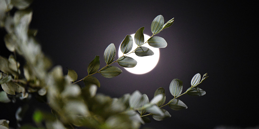 """Full """"Flower Moon"""" Intuitively Guided Group Healing with Denise"""