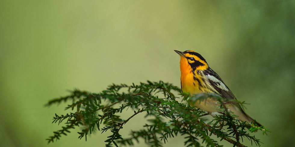 Beginning to Bird: Migration Training (Adult Program)