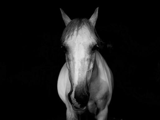 Montana Center For Horsemanship Hosting Conference Of Horse, Human, & Nature