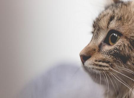 猫の間でも新型コロナ感染、東大など研究発表、厚労省も過度な接触控えるよう呼びかけ