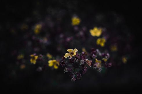 Image by Haris Suljic